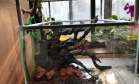 经过大家的指点水草缸今天开缸了沉木杜鹃根青龙石水草泥