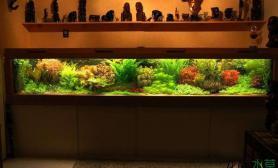 绝美荷兰景水草缸能做成这事儿的都是人才鱼缸水族箱