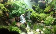 水草造景水陆缸制作(更新中)