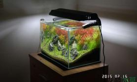 水草造景45X30X30小缸水草缸5周变化历程沉木杜鹃根青龙石水草泥
