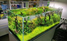 特大水草缸造景欣赏案例