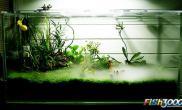 敞口水陆缸恶魔蟹樱叶捕虫堇