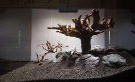 骨架沉木杜鹃根青龙石水草泥枯藤、老树、昏鸦沉木杜鹃根青龙石水草泥(更新一下水草缸木头反过来)