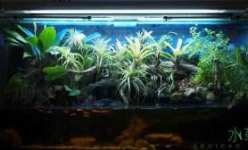 水草造景已经一年的1图片2米水陆缸