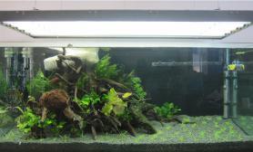 草缸的成长过程水草缸人生的第二个草缸鱼缸水草造景沉木杜鹃根