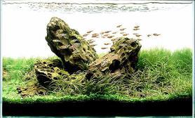 水草缸造景沉木水草泥化妆砂青龙石60CM尺寸设计15