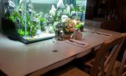 水草缸前的烛光晚餐……