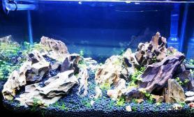水草造景新开一个小缸水草缸请指教鱼缸水族箱