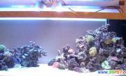 为新的海缸建立生态系统(图)