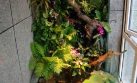 敞口水陆缸热带丛林背景墙