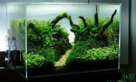 水草缸翻缸