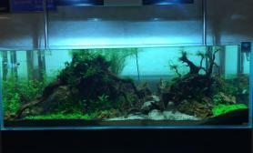 家居水景之水草超白鱼缸造景教程