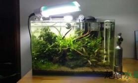 更新下水草缸的翻缸效果水草缸大伙给看看