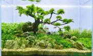 [转载]小树迎风亦美丽,水草造景皆动人。