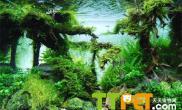 荷兰式水草造景的知识