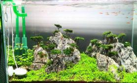 鱼缸造景水草之颠祝贺双冠联盟店开张大吉