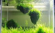 水草造景阿凡达悬浮仙境