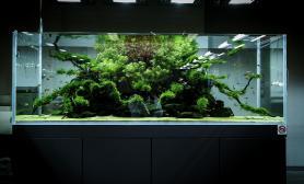 新泻大自然ADA水族馆