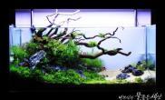 水草造景(90CM)韩国高手水族沉木