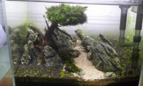 水草造景发下我的两棵树景鱼缸水草造景鱼缸水草造景鱼缸水草造景鱼缸水草造景