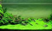 水草缸硝化细菌是如何培养的
