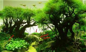 新手提问之怎么把MOSS水草种到沉木上