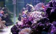岩礁生态缸设置的必备条件(图)