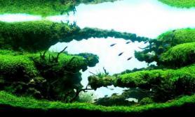 一图流水草缸神秘的大自然