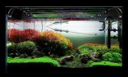 海南香烟荷兰风格水草造景作品展