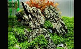 霍比特人主题鱼缸水草造景