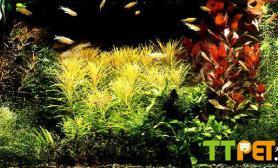 99款经典水草造景缸Ⅱ多图尺寸设计