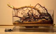 分享一组微型缸造景骨架创作作品