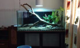 水草造景自己DIY水陆原生鱼缸