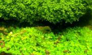 黄黄的水水草缸乱乱的缸(第二季)