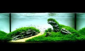 水草造型之简约不简单