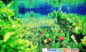地球赤道上的热带观赏鱼之乡(图)