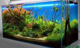 绿色水草的繁茂红色水草的艳美水草缸水草缸里应有尽有鱼缸水族箱