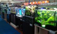 台湾热带鱼水草专门店的水草造景作品
