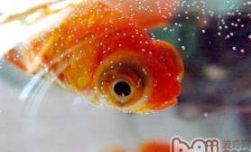 解析老水养鱼的优缺点