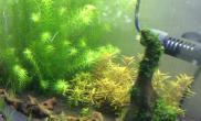 开了1个月的90虾草缸水草缸30只水晶虾看不见了水族箱