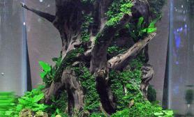 水族箱造景森林之魂