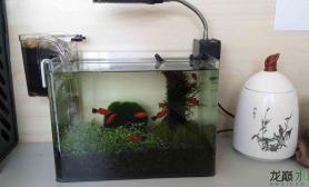 水草造景办公室25CM小缸