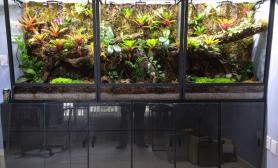 雨林水陆生态缸29