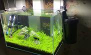 一个多月了鱼缸水族箱逐步升级设备鱼缸水族箱
