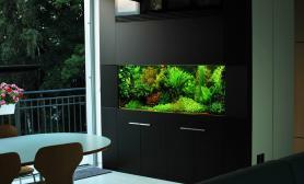 沉木青龙石造景缸与家装空间-44