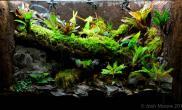雨林生态落叶雾水碰头缸