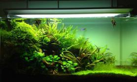 鉴赏水陆缸经历过大半年后的变化鱼缸水族箱
