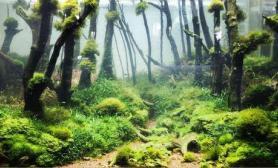 水下森林美景