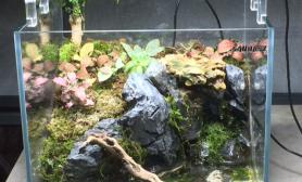 水草造景家里自己鼓捣的30方缸小水陆