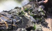 用自己家青龙石造景过程水草缸快来学习